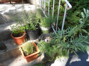 Have steps leading to your door?  Grow your herbs in some large pots there!