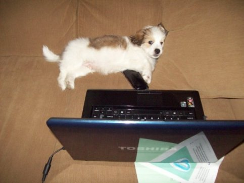 To be fair, puppies and the internet are a glorious thing.
