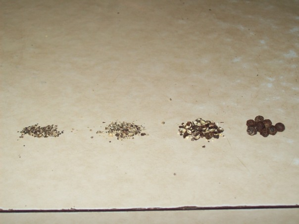 Left to right: Table pepper, freshly ground pepper, cracked peppercorns, whole peppercorns.